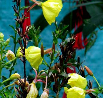 pajaro entre flores (1)