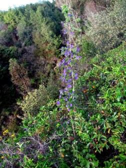 Las flores violetas del páramo