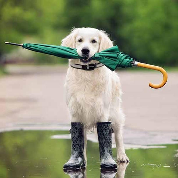 dog in puddle