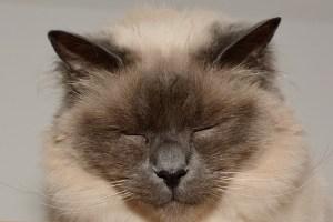 目を閉じて集中する猫