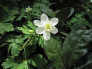 「国立科学博物館附属 自然教育園」に咲く花