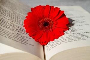 本の上に一輪の花