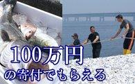 地曳網漁業体験&新鮮な海の幸バーベキュー! イメージ