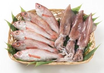 日本海の天然鮮魚詰合せ(大)下処理済み 寄付金額20,000円