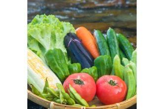 【定期便年4回】阿波の国海陽町 旬のお野菜詰め合わせセット4-5名様以上向け