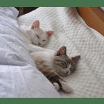 【最新版】ふるさと納税でもらえる「ベッド」還元率ランキング10!