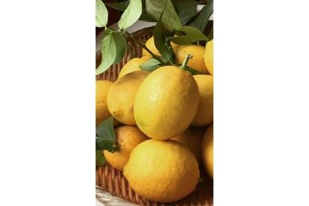 国産有田レモン約5kg赤秀【マルユー園】 イメージ