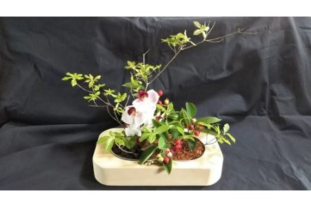 天然加湿器「香湿木(かしつき)」 イメージ