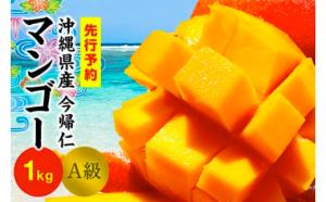 今帰仁マンゴーA級1kg【先行予約】【2021年6月~8月頃発送】生産者直送