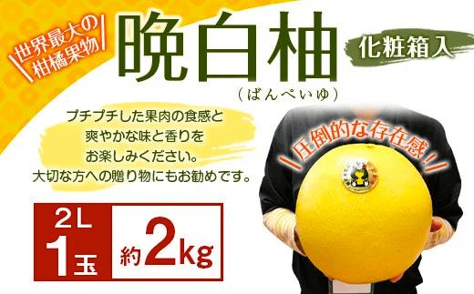 【期間限定】八代特産 晩白柚(ばんぺいゆ)2L(約2kg)サイズ1玉 化粧箱入 イメージ