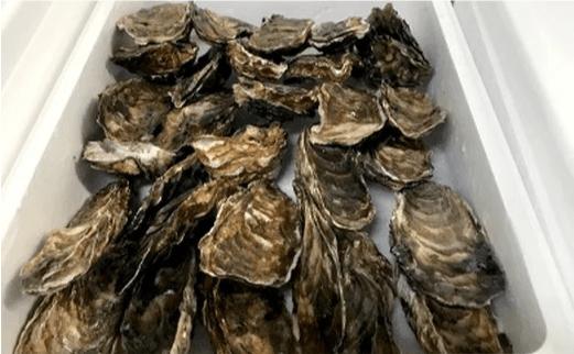 【予約受付】(2020年10月末~出荷分)生牡蠣 大~特大サイズ 約2.8kg(20~25個入) イメージ