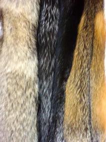 P1000610-tanned-pelt