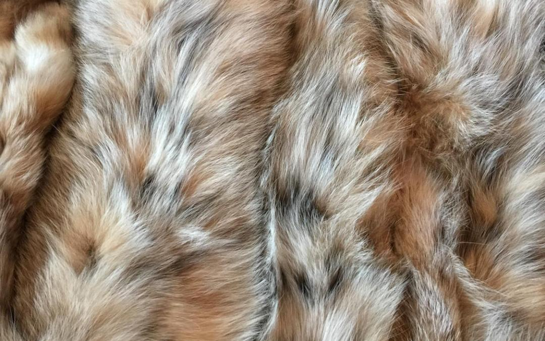 Wild Lynx Fur – One of a kind quality fur product