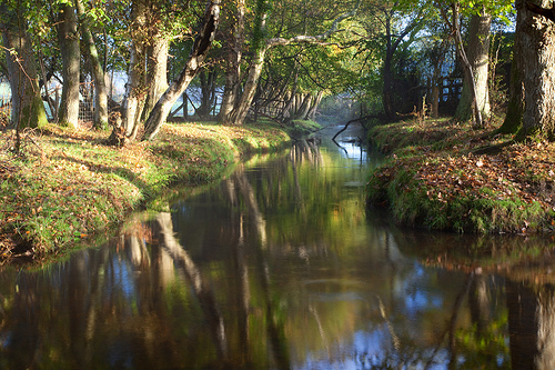 The stream just a few yards from the Furzehill Farm CL.