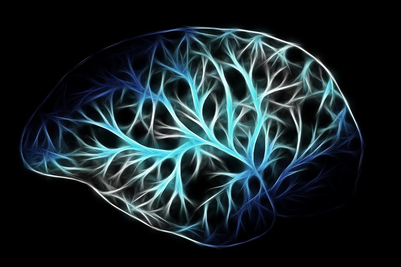fuse-d human brain memory