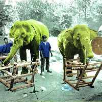 Thai Elephant Orchestra s-t CD on Mulatta (2001)