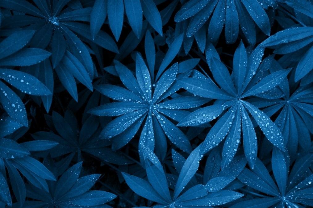 art-backdrop-black-botanical-botany-colour-daily-dark-design.jpg