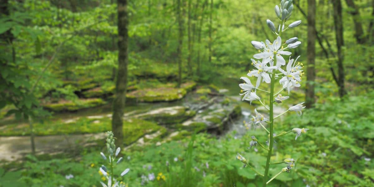 Hyacinth-and-Elk-Lick-Creek-slider-1200x600-1.jpg?fit=1200%2C600&ssl=1