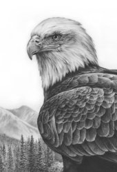 bald_eagle_study_by_denismayerjr-d60g640