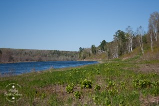 The banks of the Miramichi