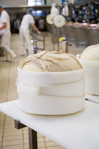 A fresh Grana Padano PDO wrapped and in its mould