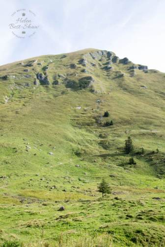 Rugged high alpine pastures