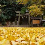 『秋の絨毯が敷き詰められた』多久神社