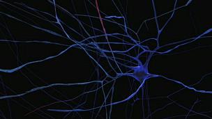Megaestudo tentará criar 'cérebro digital'
