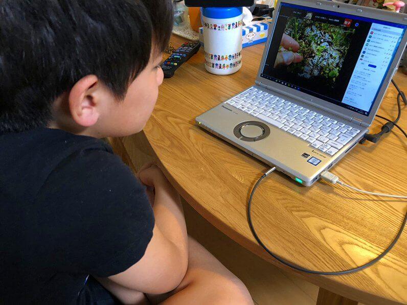 専門家が自然の魅力を生解説 無料の子供向け観察会をネット開催003
