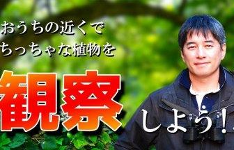 無料の子供向けネット自然観察会! 夜の田んぼで生き物探検!001