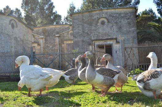 Geese and the Magazine