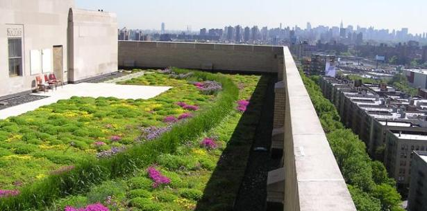 Green Roof NYC