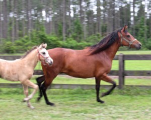 Cassandra do MManor and foal Eduardo - under contract now following our trip.