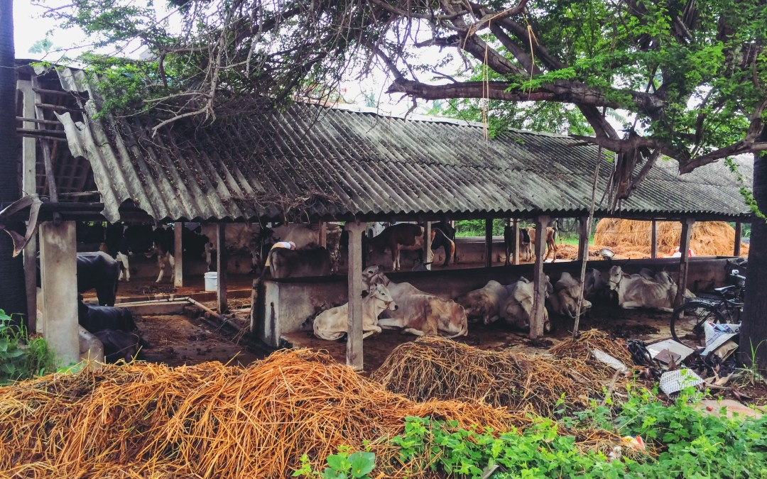 India 2016: My village's point of view