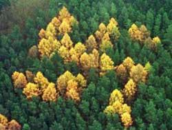 Swastika ormanının ilk görüntüsü