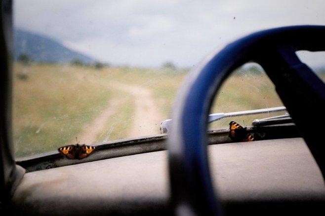 foto: Nikolay Zhelyazkov - Butterfly Route