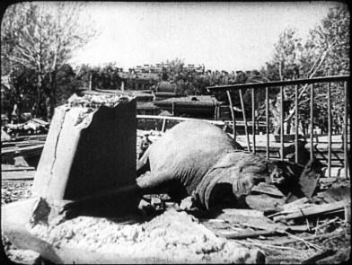 Leningrad Kuşatması'nın ilk öldürdüğü: Fil Betty 3