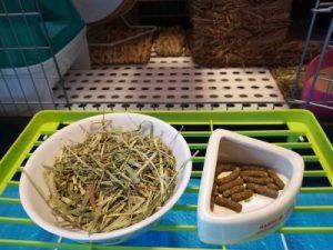 chinchilla-foods