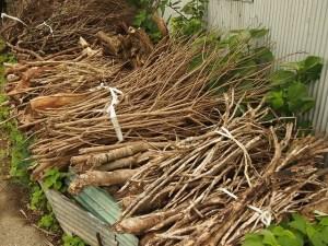 水戸市で木材の廃材、枝木処分