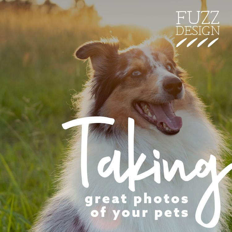 Taking photos of your pet