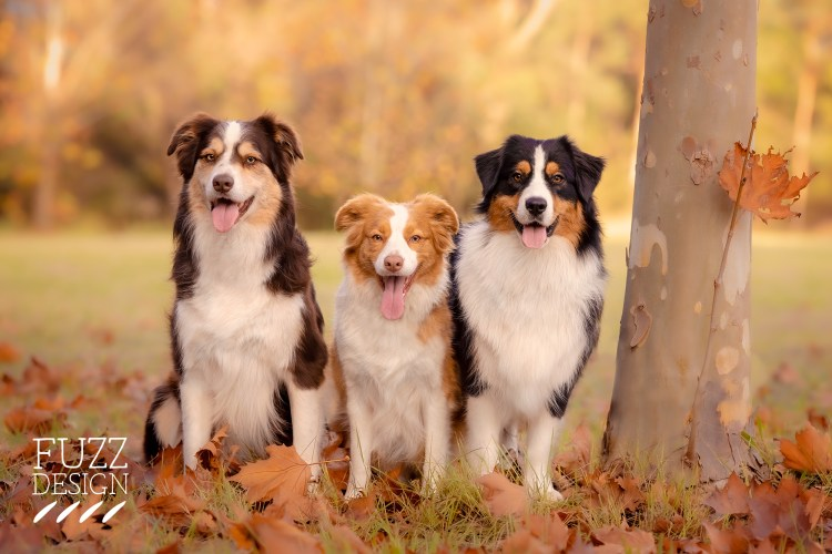 How to find a pet photographer
