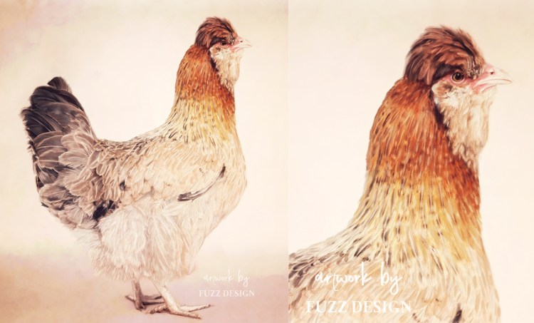 cute painting portrait chicken
