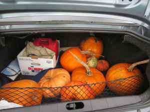 Trunk of pumpkins