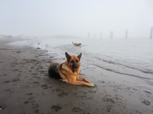 Hannah at the beach in the fog.