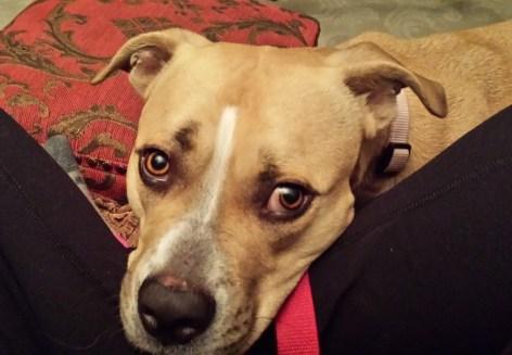 FuzzyBuddyBC Moxie wants to cuddle