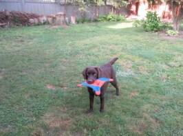 Surrey Langley Vancouver Dog Boarding