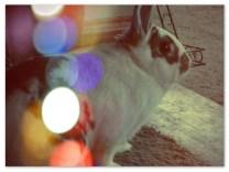 lights bink