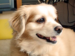 Teddy Bear - so handsome!