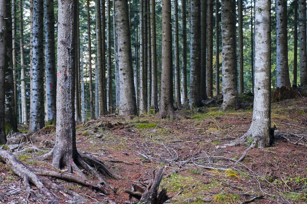 Rapporto PEFC: aumentano foreste gestite in modo sostenibile in Italia – Salgono a 889.032 gli ettari di boschi e piantagioni certificati PEFC
