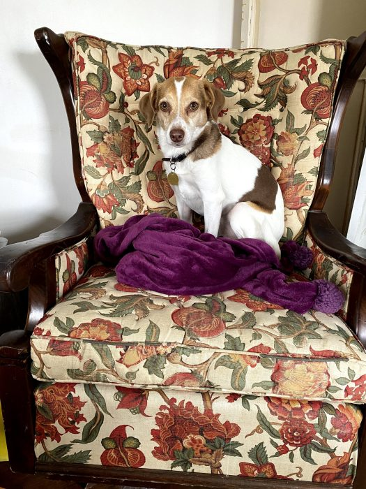 The author's dog, Addy, sits on the floral rocking chair. Both are the subject of inspiration for this art-making activity.